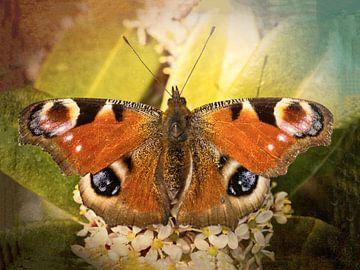 dagpauwoog vlinder als vintage look van eric van der eijk