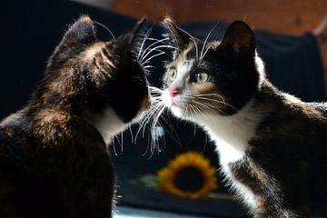 Spiegelbeeld (kitten) van Aafke's fotografie