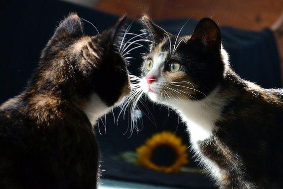 Spiegelbeeld (kitten)