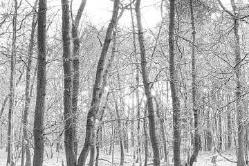 Bomen in monochroom van Sjaak den Breeje