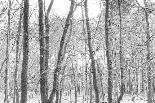 Bomen in monochroom