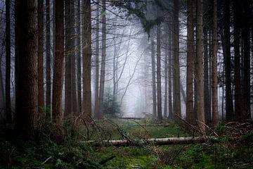 Verlassene Waldweg von