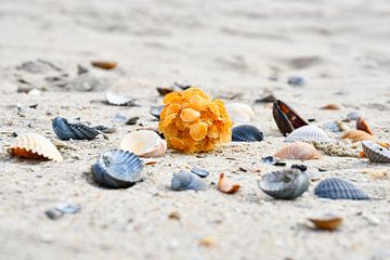 Schelpen op het strand van Zeeland