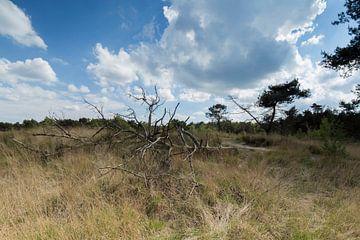 Dode boom von Bart van Dongen