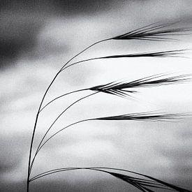 Grassen dansen in de wind van Frank Andree