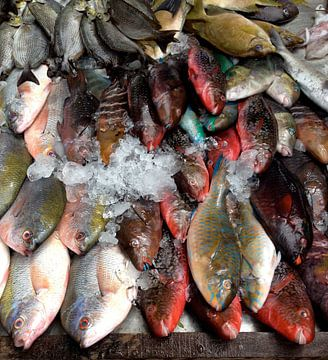 bunte Fische Thailand van Pünktchenpünktchen Kommastrich