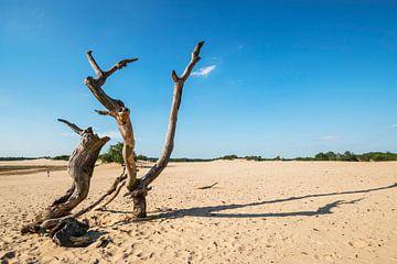 Loonse en Drunense duinen van Sandra Tukker