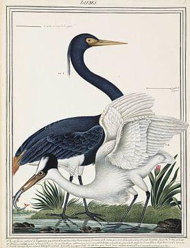 Reigers, Ogier de Gombaud van Teylers Museum