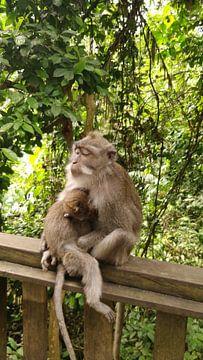Moeder aap sur Lennard van Boetzelaer