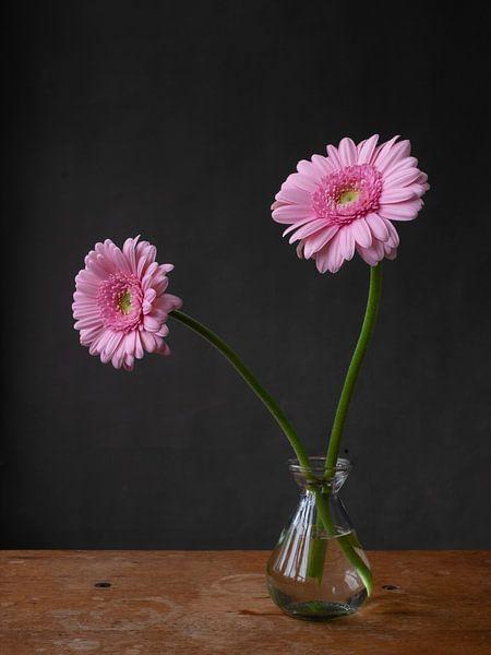 Foto print  | roze gerbera's | roze bloem | modern | botanisch | bloemen | lente van Jenneke Boeijink