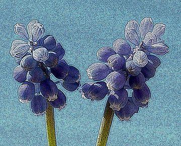 Blauwe druifje van Jose Lok