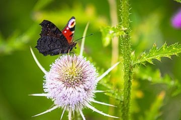 Vlinder op paarse bloem van JWB Fotografie