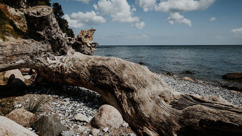 Baumstamm an der Ostseeküste von Sassnitz (Rügen) von Denny Lerch