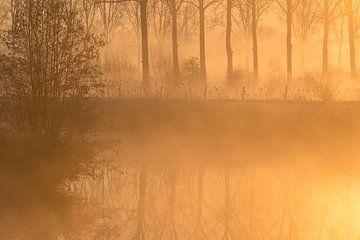 Opkomend mist op een ijzige zonnige morgen aan de Dender van Marcel Derweduwen