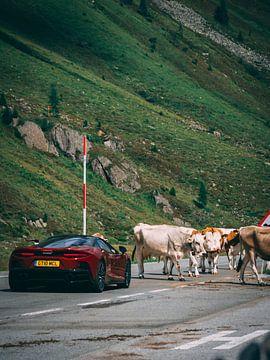 Auto wartet auf den Übergang der Kühe von Rianne Jacobs