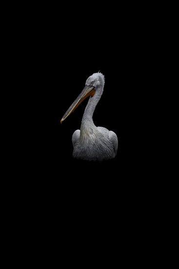 Pelikan von JNSSN Fotografie