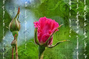 Wilde roos Art