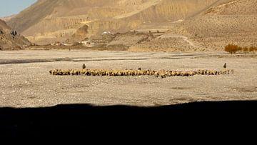 'Schaapskudde', Jomsom- Nepal van Martine Joanne