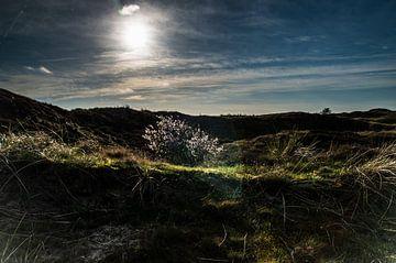 Donkere duinen op Texel van Hans Wijnveen
