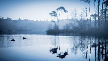 Enten im Teich von Sam Mannaerts Natuurfotografie