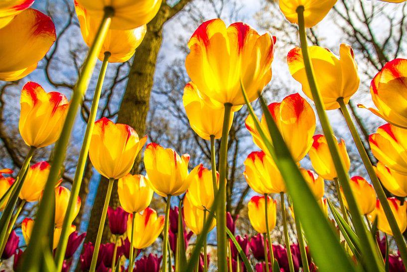 Fleurige gele tulpen van Koop je Canvas