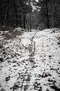 Fietspad in het bos
