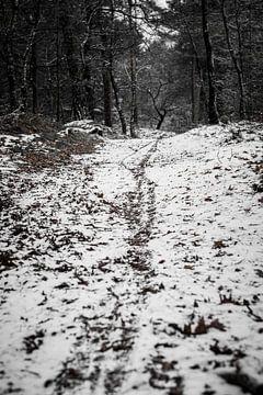 Fietspad in het bos van Marco Bakker