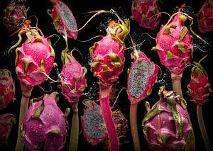 Pitaya dragona