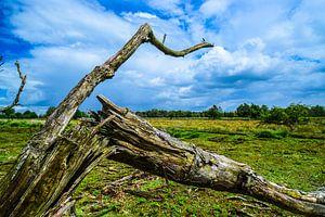 Geknakte boom bij Bargerveen von Lisanne Bosch