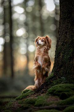 Chihuahua in einem wunderschönen dunkelgrünen Wald von Lotte van Alderen