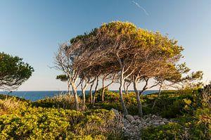 Cala d'Or, Spanje van