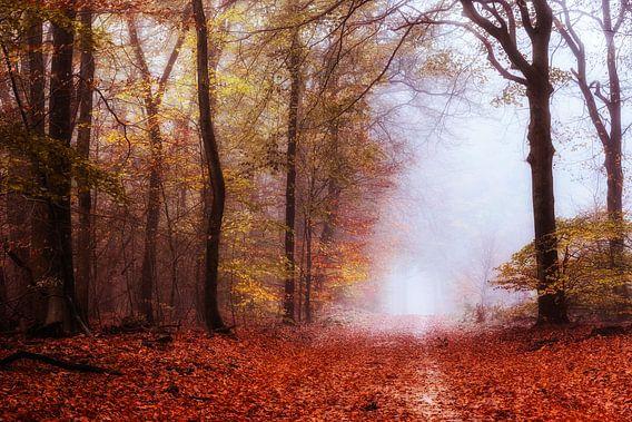 Pittige herfst van Tvurk Photography