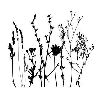 Botanische illustratie met planten, wilde bloemen en grassen 1.  Zwart wit.