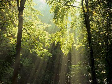 Sonnenstrahlen im Wald von Markus Lange