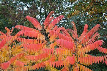 Herfstkleuren  von Arthur Wijnen