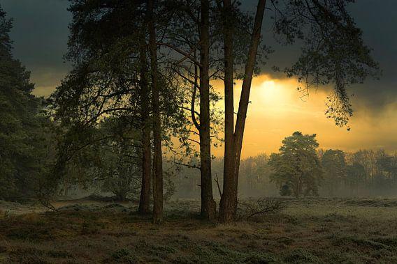 Sfeervol bos tafereel
