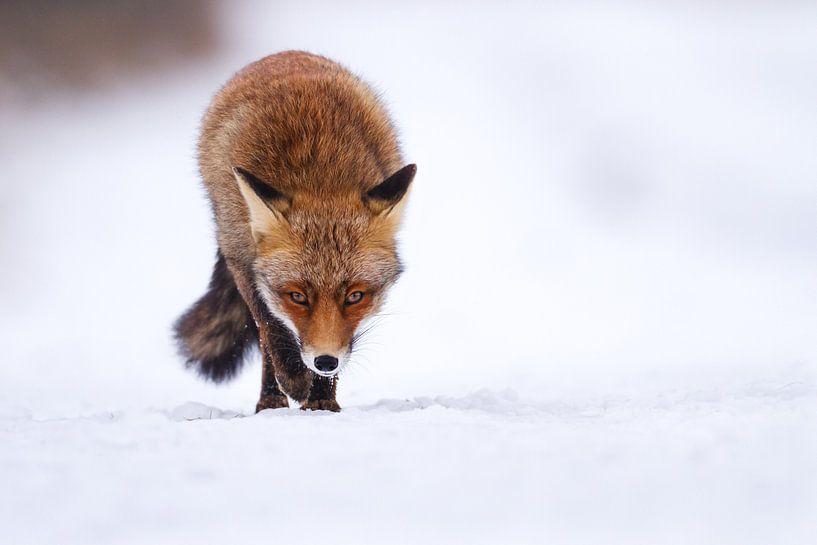 Winter Walk van Pim Leijen