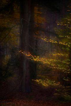 Mystischer Herbstwald von Dirk-Jan Steehouwer