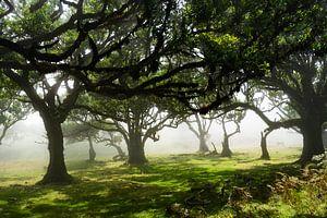 Sprookjesachtig bos van