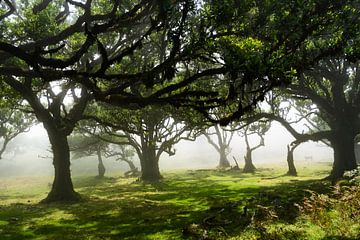 Sprookjesachtig bos van Michel van Kooten