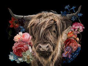 Schotse Hooglander in de bloemetjes
