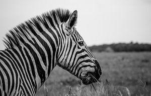 Zebra in St. Lucia Wetlandpark Zuid-Afrika  van Jordi Woerts