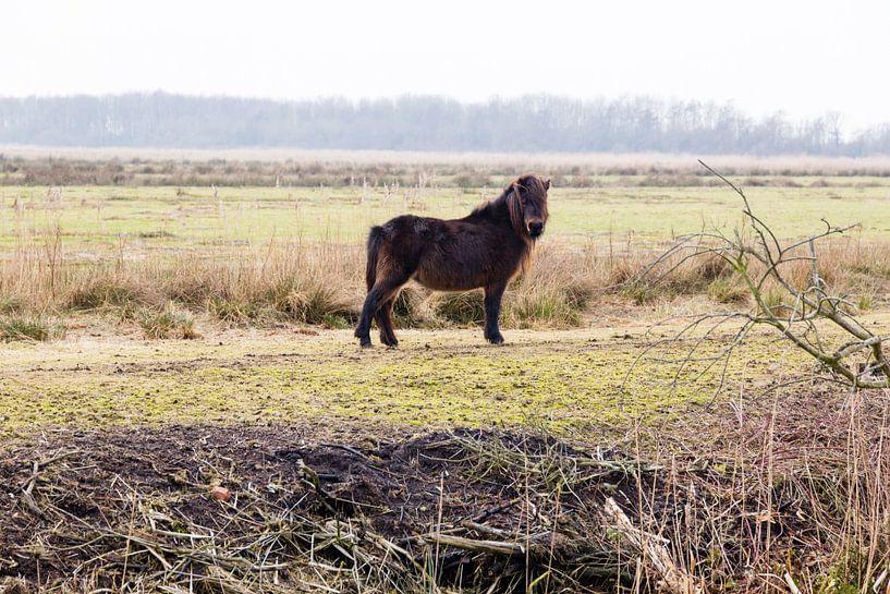 Pony in het Groningse landschap van Arline Photography