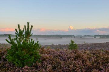 Jonge Den op de Heide in de ochtend von Sjoerd van der Wal
