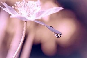 Een regendruppel aan een bloemblaadje