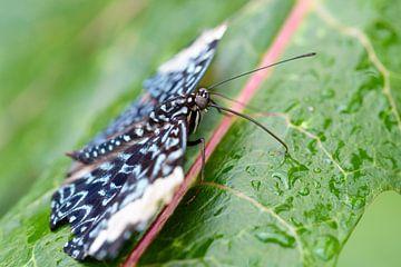 Vlinder van Ronald van Emmerik