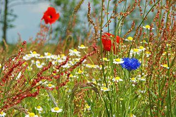 Wilde bloemenweide van Jeroen van Deel