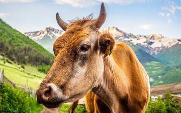 Fotogenieke koe van Stijn Cleynhens