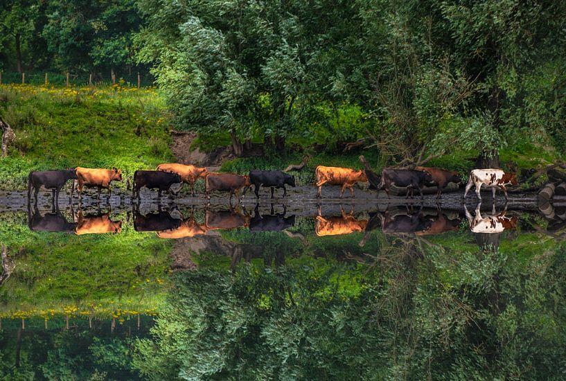 Koeien lopend langs de Rivier met reflectie. van Brian Morgan