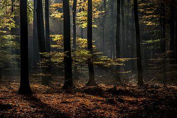 herfstsfeer van Contrast inBeeld